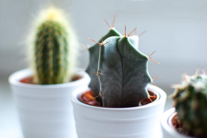 Succulents in a diagonal row.