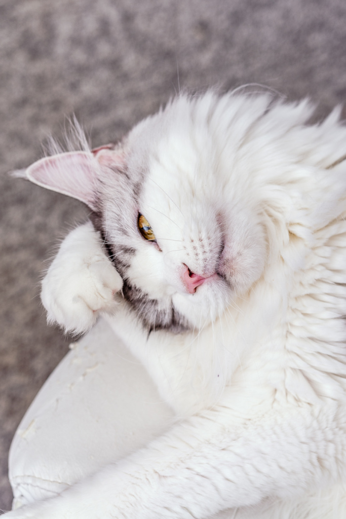 How to Take Cat Photos That Will Attract and Amuse - Rubby the camera shy