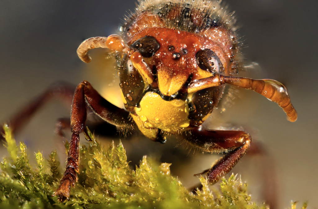 You Can Do Macro at Home - hornet