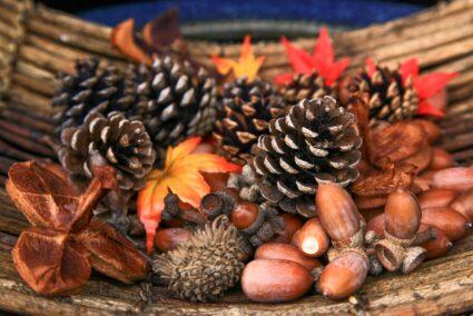 日本の秋の彩りを楽しもう